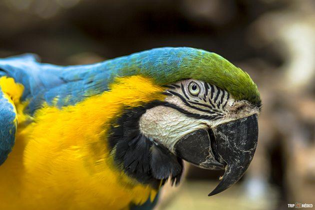 guacamaya-akumal-monkey-sanctuary-630x420.jpg